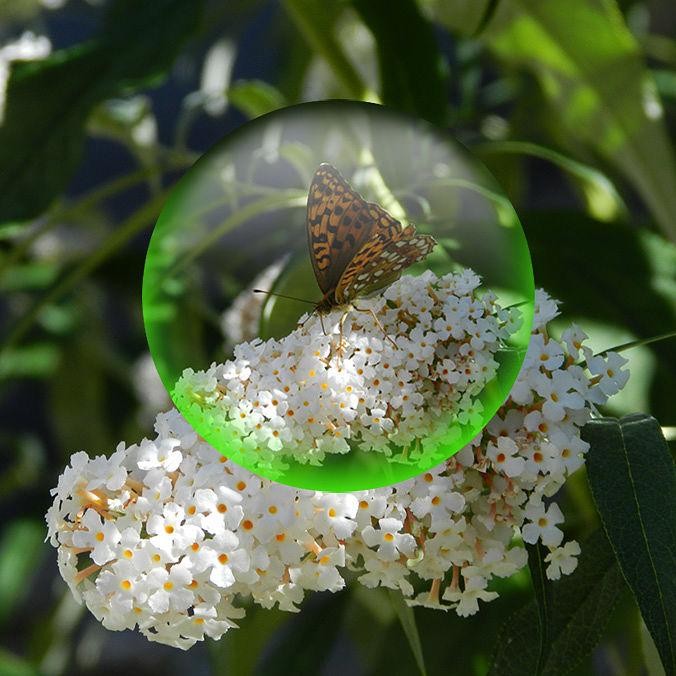 Esfera cristal mariposa - Natalia Ortiz