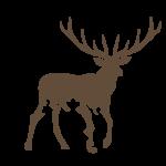 Logo Ciervo - pluma Illustrator